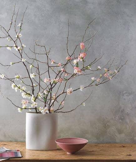 cherry blossom plant minimalist decor