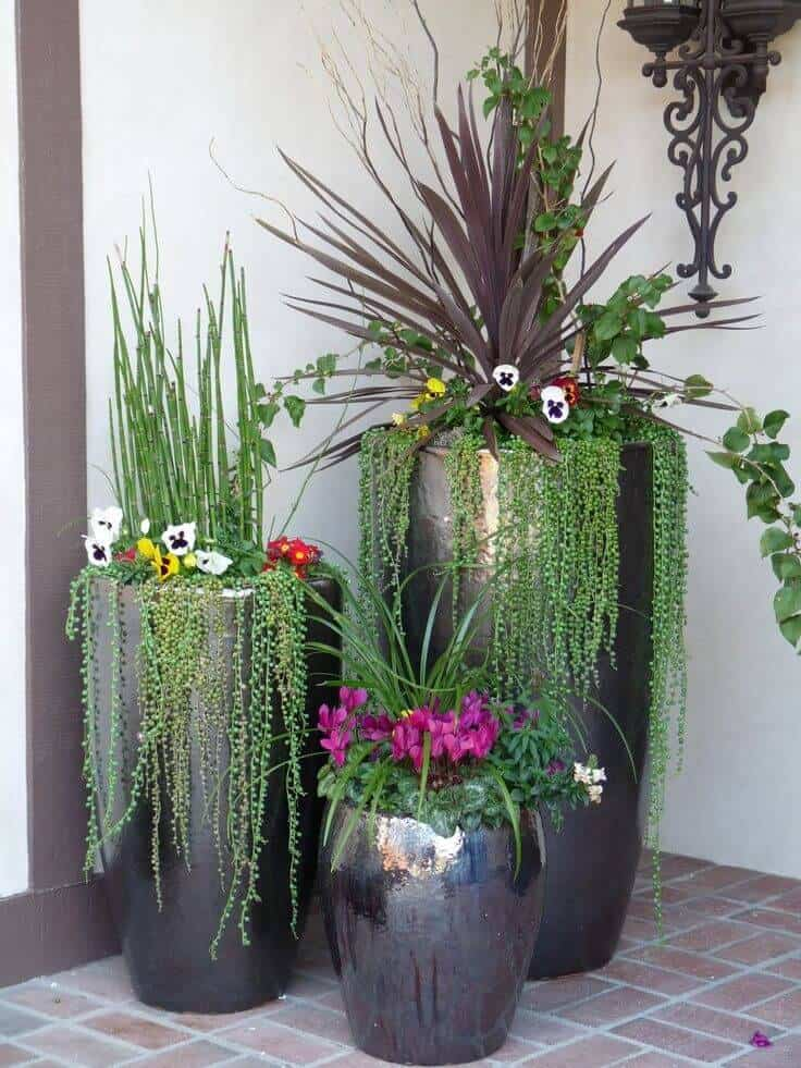 potted plants ideas for patio