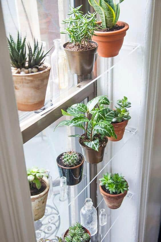 tiny house plants