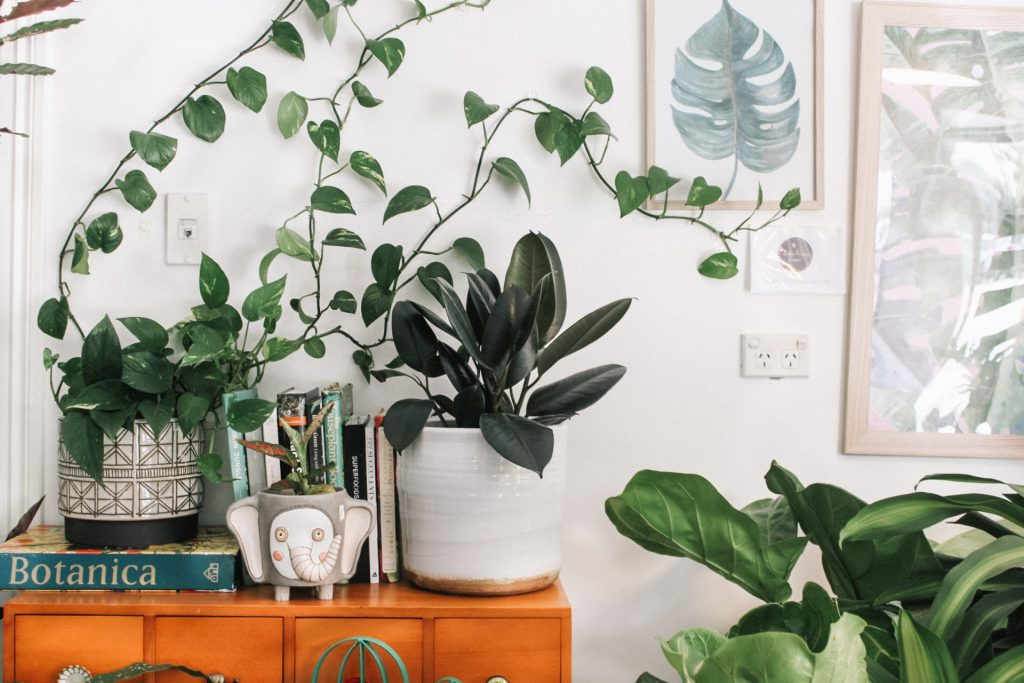 Best Office Plants - 7 Top Plants For Your Work Space