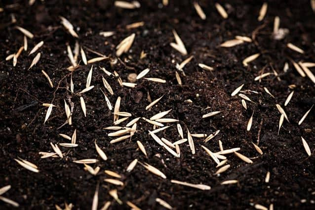 Sprinkle Grass Seed - 2 Beautiful Ways