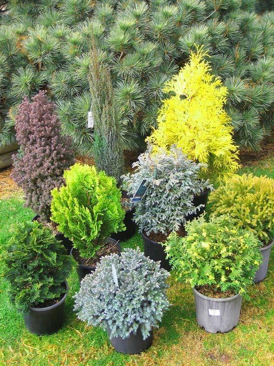 Garden Plants All Year