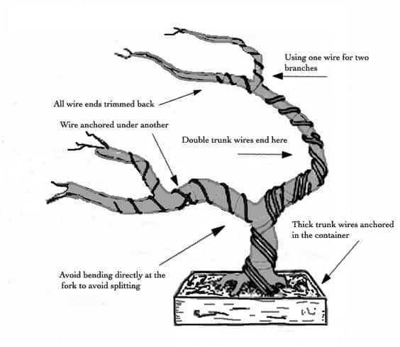 Growing A Bonsai Tree Is Easy With These 2 Basic Steps