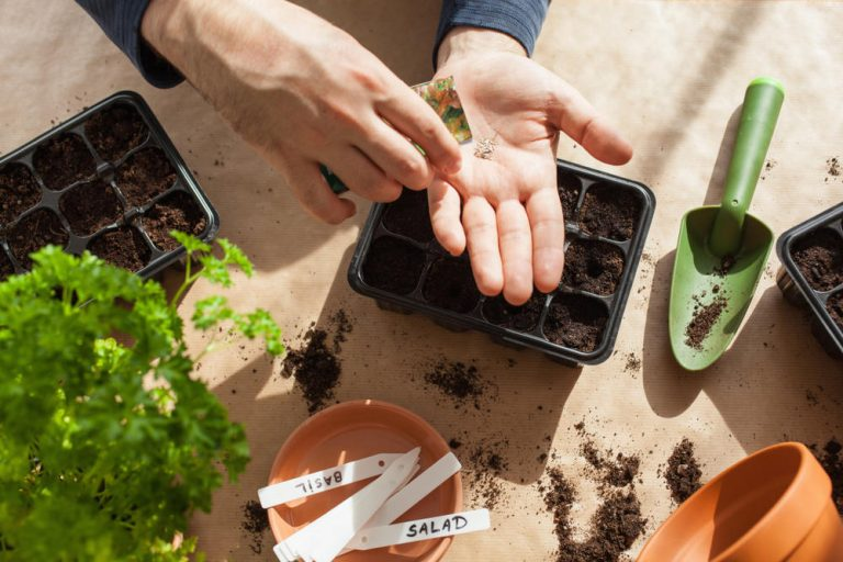 Use Vegetable Scraps to Replant Them in Your Own Kitchen