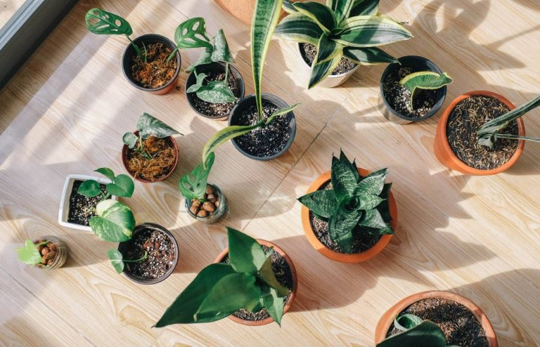 Beautify Your Home With These 5 Easy To Care Indoor Plants