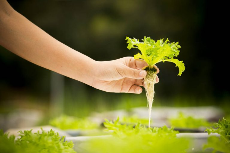 10 Reasons to Have Your Hydroponic Garden at Home