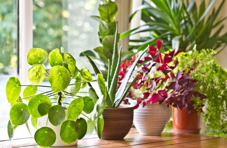 7 Indoor Plants That Are Good For Your Health